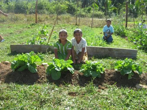 Family Garden, Santa Teresa Village, southern Belize